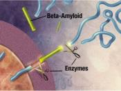 English: Enzymes act on the APP (Amyloid precursor protein) and cut it into fragments of protein, one of which is called beta-amyloid and its crucial in the formation of senile plaques in Alzheimer Enzymes act on the APP (Amyloid precursor protein) and cu