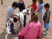 Work of a therapy dog: Stella visited her foster kids school to educate the kids about caring for animals and about handicaps. She had a blast!!!