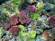corals. The picture was taken in Papua New Guinea