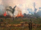 Burning rainforest in Brazil