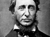 English: Portrait by Benjamin D. Maxham (daguerreotype), black and white of Henry David Thoreau in June 1856. The writer-collar post a beard and is dressed in a black frock coat, a white shirt and a black bow tie. Français : Portrait par Benjamin D. Maxha