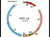 English: Genomic structure of Human papillomavirus HPV Español: Estructura genómica del virus del papiloma humano VPH