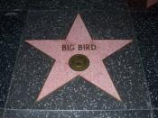 English: Big Bird's star on the Hollywood Walk of Fame.