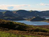Hoopers Inlet, Papanui Inlet, and sheep