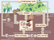 Hebrew version of Nitrogen Cycle