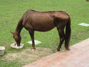 I found this horse at the CES Veterinary Clinic in Envigado Colombia.