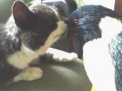 Felix and Penguin