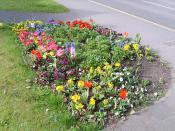 Wheelock Spring Flowers