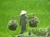 English: farmer in Binh Dinh Province, Vietnam