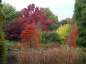Autumn Colours @ Hillier Gardens