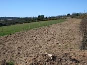 English: A New Gas Pipeline. The edge of this pasture remains bare after the installation of an underground gas pipe.