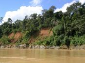 English: View of the upland tropical rain forests of Madre de Dios, Peru, June 2004. It should be included in the article: Amazon, Tropical rain forest, Peru