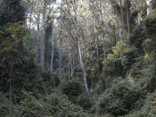 Rainforest Gully