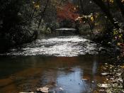 Shoal Creek (2)