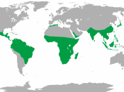 English: Map showing range of non-human primates.