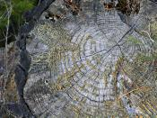 Moss in growth rings