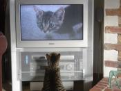 My cat watching himself when he was a kitten on my TV. He was enthralled!