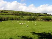 English: Sheep Farming near Durras. This grid square is totally over to pasture land, a road and a river.