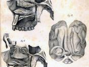 Antonio Scarpa: Anatomy of Olfaction (Smell), c. 1779