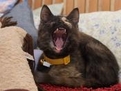 Baby Helen:  A Quadruple Upper Canine Yawn!