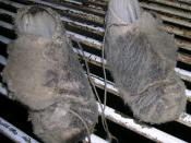 Synthetic shearers moccasins