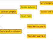 diagram explaining the physiology of arterial pressure