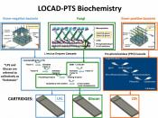 English: LOCAD-PTS Biochemistry. Enzyme cascades are shown for all three current types of LOCAD-PTS cartridge. Each cartridge type detects one of three groups of microorganisms: gram-negative bacteria (endotoxin), fungi (glucan) and gram-positive bacteria