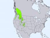 Range map of Engelmann spruce (Picea engelmannii)