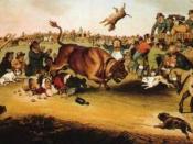Bull-running