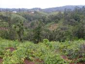 Many regions in Cameroon are particularly mountainous. Rampant rates of deforestation threaten the regions watershed and soil fertility. Therefore, TREES is working with farmers to plant trees along hillsides to improve the soil and protect against erosio
