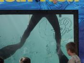 Kids play games and get wet with Navy Divers
