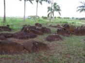The Kukaniloko Birthing stones.