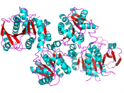 English: Crystal structure of Glycogen synthase 1 from