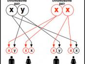 Fragile X Syndrome Inheritance - Mother Two
