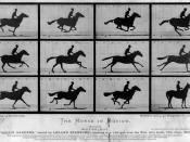 The Horse in Motion by Eadweard Muybridge.