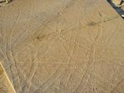 English: Climactichnites fossil trackways from the late Cambrian period in central Wisconsin; full view.