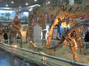 Dinosaur Exhibition Beijing