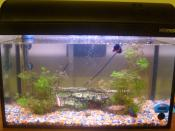 A shot of our 10 Gallon tank. Hopefully being used as an example of a personal water tank.