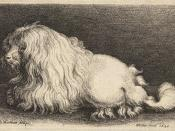 A 17th century engraving of a poodle.