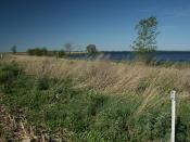 WRP Easement Boundary on a Wetland