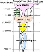 évolution humaine simplifiée