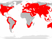 English: Distribution map of Mus musculus. Español: Mapa de distribución del ratón común (Mus musculus).