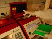English: PCR masina tarvis on olemas stripid, kuhu saab panna korraga 8 PCR reaktsiooni käima