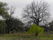Springtime in the oak belt
