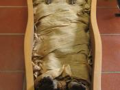 English: An Egyptian mummy kept in the Vatican Museums.