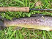 Fly rod and reel with a brown trout from a chalk stream in England