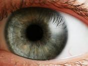 Human eye. Español: Iris de un ojo humano. El ojo recibe los rayos de luz que provienen del exterior y los transforma en impulsos nerviosos en la retina, formada por las células de la visión conocidas como conos y bastones. فارسی: چشم انسان Français : Œil