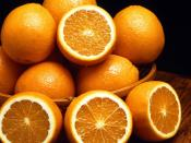 Ambersweet oranges, a new cold-resistant orange variety. USDA photo. Image Number K3644-12.