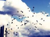 birds. migration