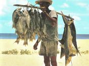 Fisherman and his catch, Seychelles. The fishes in this catch, including small sharks, were hooked on hand lines many miles off shore.